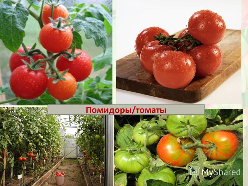 Помидоры/томаты
