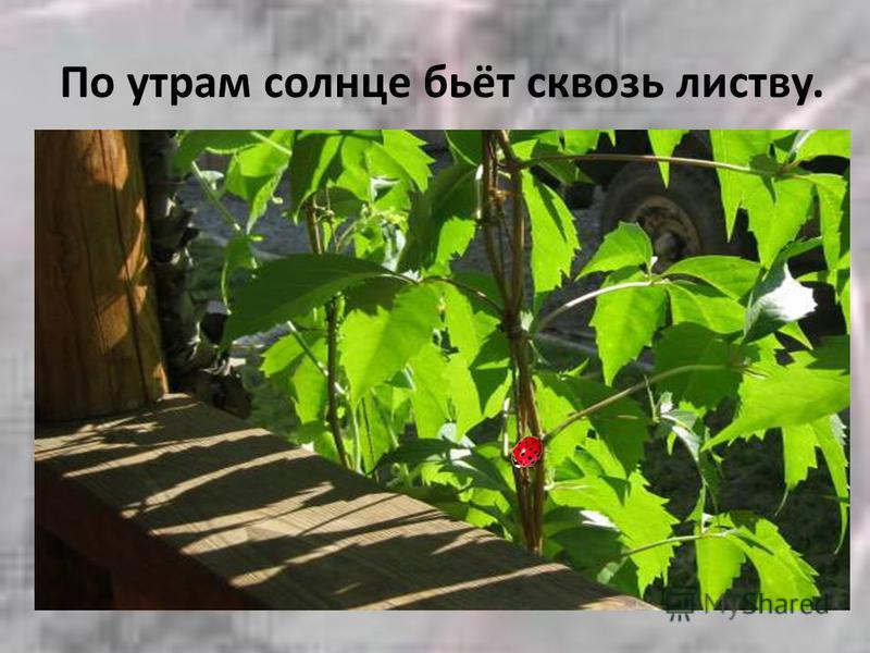 По утрам солнце бьёт сквозь листву.