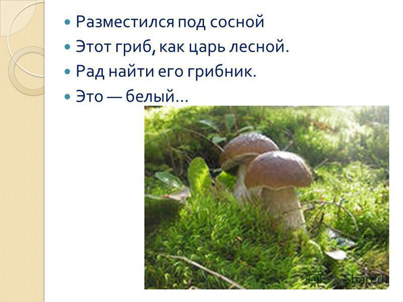 Разместился под сосной Этот гриб, как царь лесной. Рад найти его грибник. Это белый...