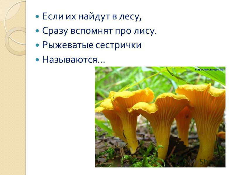 Если их найдут в лесу, Сразу вспомнят про лису. Рыжеватые сестрички Называются...