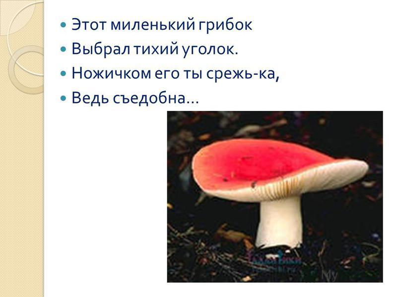Этот миленький грибок Выбрал тихий уголок. Ножичком его ты срежь - ка, Ведь съедобна...