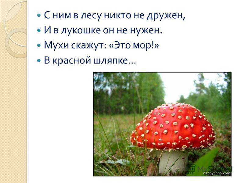 С ним в лесу никто не дружен, И в лукошке он не нужен. Мухи скажут : « Это мор !» В красной шляпке...