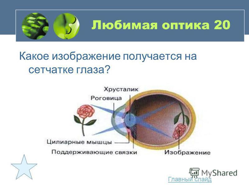 Любимая оптика 20 Какое изображение получается на сетчатке глаза? Главный слайд