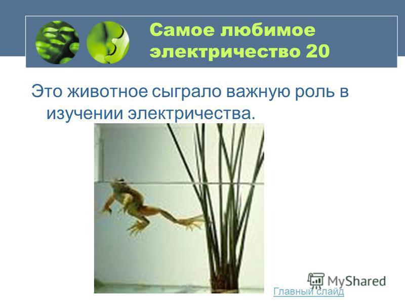 Самое любимое электричество 20 Это животное сыграло важную роль в изучении электричества. Главный слайд