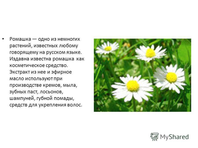 Ромашка одно из немногих растений, известных любому говорящему на русском языке. Издавна известна ромашка как косметическое средство. Экстракт из нее и эфирное масло используют при производстве кремов, мыла, зубных паст, лосьонов, шампуней, губной по
