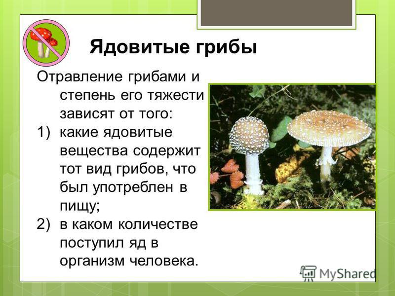 Ядовитые грибы Отравление грибами и степень его тяжести зависят от того: 1)какие ядовитые вещества содержит тот вид грибов, что был употреблен в пищу; 2)в каком количестве поступил яд в организм человека.
