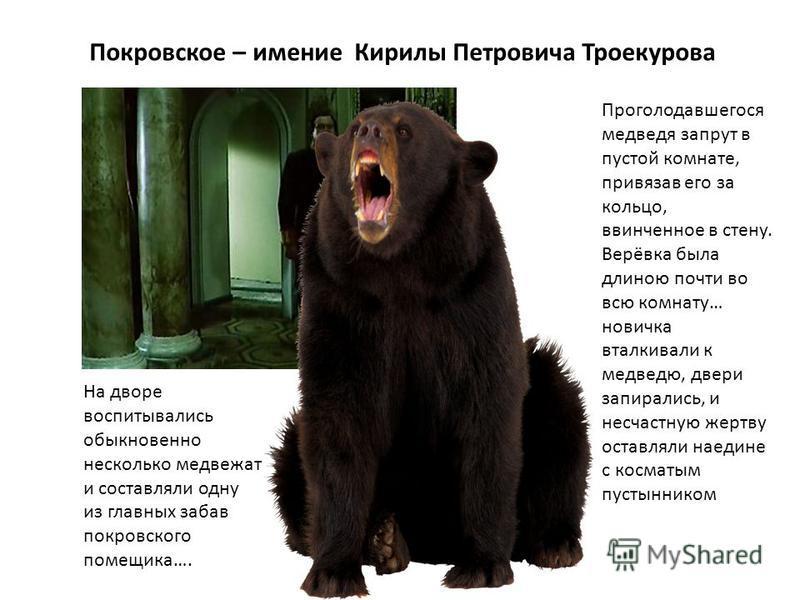 Покровское – имение Кирилы Петровича Троекурова На дворе воспитывались обыкновенно несколько медвежат и составляли одну из главных забав покровского помещика…. Проголодавшегося медведя запрут в пустой комнате, привязав его за кольцо, ввинченное в сте