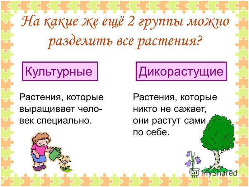 На какие же ещё 2 группы можно разделить все растения? Растения, которые выращивает чело- век специально. Растения, которые никто не сажает, они растут сами по себе. Культурные Дикорастущие