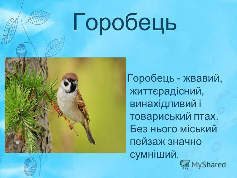 Горобець Горобець - жвавий, життєрадісний, винахідливий і товариський птах. Без нього міський пейзаж значно сумніший.
