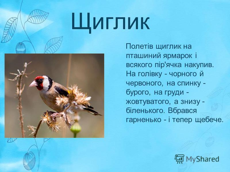 Щиглик Полетів щиглик на пташиний ярмарок і всякого пір'ячка накупив. На голівку - чорного й червоного, на спинку - бурого, на груди - жовтуватого, а знизу - біленького. Вбрався гарненько - і тепер щебече.