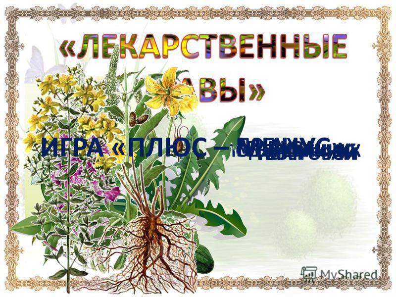 ЛОПУХ КРАПИВА ПОДОРОЖНИКОДУВАНЧИК ИВАН - ЧАЙЗВЕРОБОЙ ИГРА «ПЛЮС – МИНУС» 11