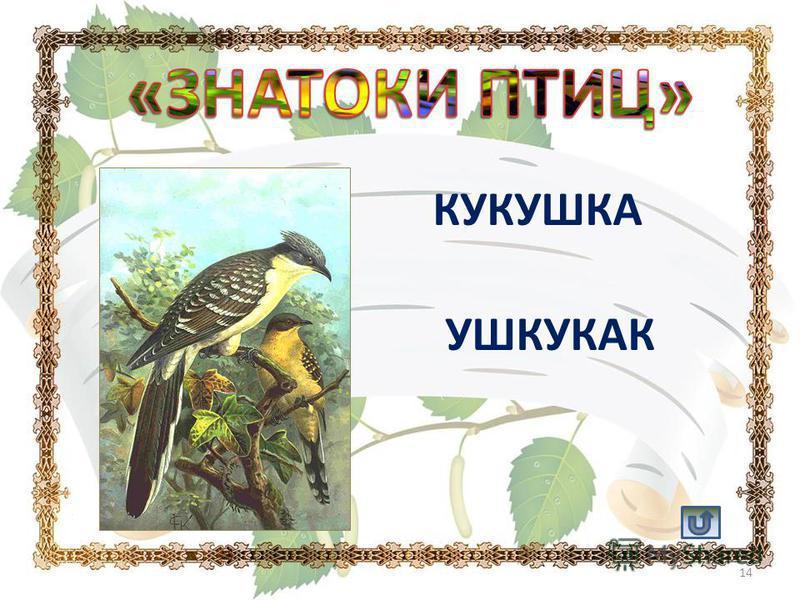 КУКУШКА УШКУКАК 14
