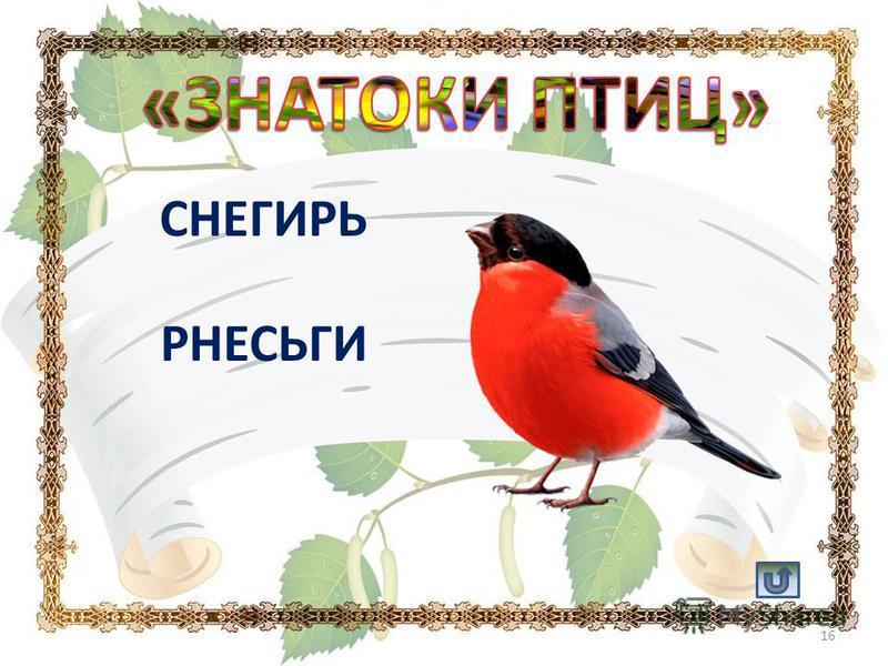 СНЕГИРЬ РНЕСЬГИ 16