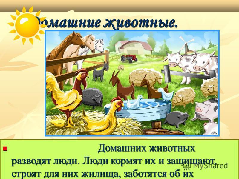 Домашние животные. Домашние животные. Домашних животных разводят люди. Люди кормят их и защищают, строят для них жилища, заботятся об их потомстве. Домашних животных разводят люди. Люди кормят их и защищают, строят для них жилища, заботятся об их пот