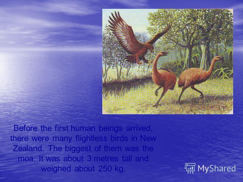 Before the first human beings arrived, there were many flightless birds in New Zealand. The biggest of them was the moa. It was about 3 metres tall and weighed about 250 kg.