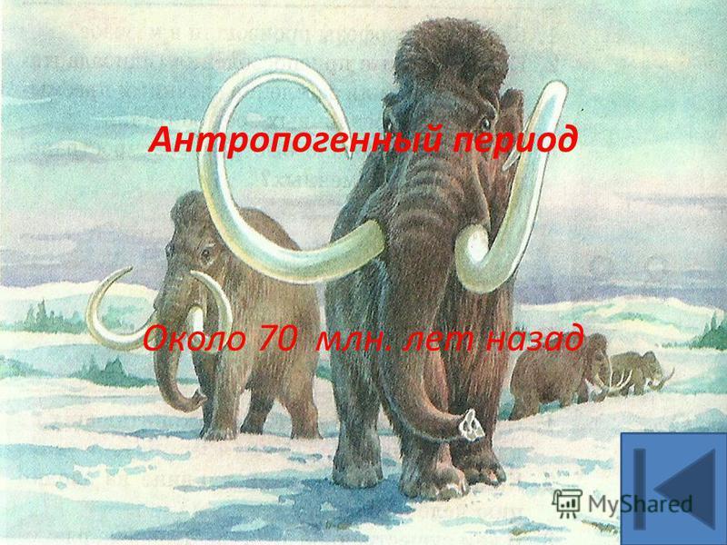 Антропогенный период Около 70 млн. лет назад