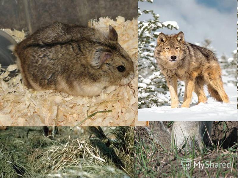 Животный мир впадины разнообразен. В степях водятся длиннохвостый и джунгарский хомячки, длиннохвостый суслик, степная пеструшка, лисица, волк и другие типичные степные формы.