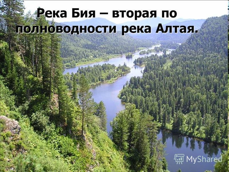 Река Бия – вторая по полноводности река Алтая.