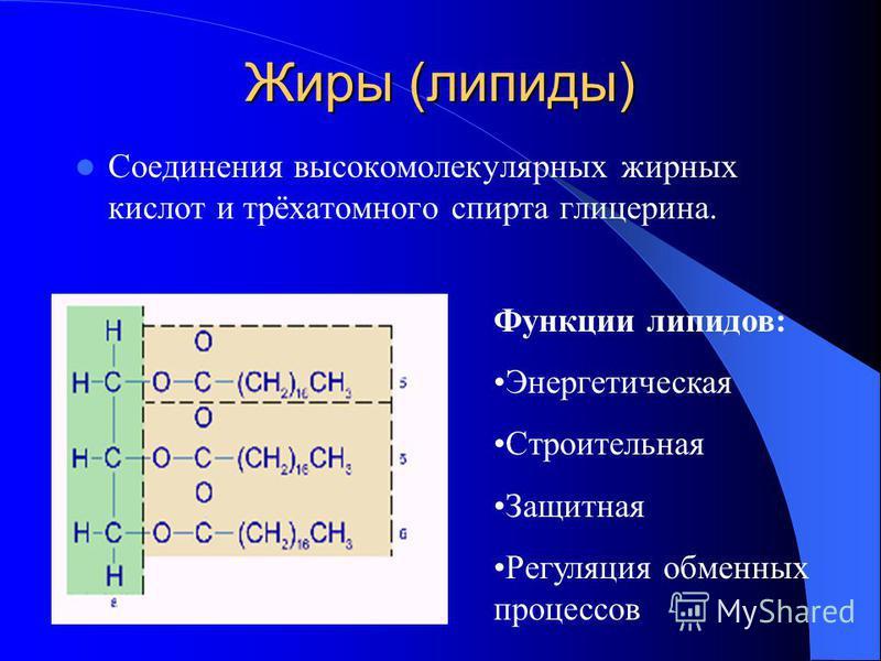 Углеводы Функции углеводов: строительная и энергетическая