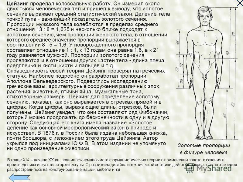 Цейзинг проделал колоссальную работу. Он измерил около двух тысяч человеческих тел и пришел к выводу, что золотое сечение выражает средний статистический закон. Деление тела точкой пупа - важнейший показатель золотого сечения. Пропорции мужского тела