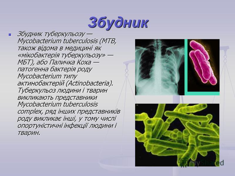 Збудник Збудник туберкульозу Mycobacterium tuberculosis (MTB, також відома в медицині як «мікобактерія туберкульозу» МБТ), або Паличка Коха патогенна бактерія роду Mycobacterium типу актинобактерій (Actinobacteria). Туберкульоз людини і тварин виклик