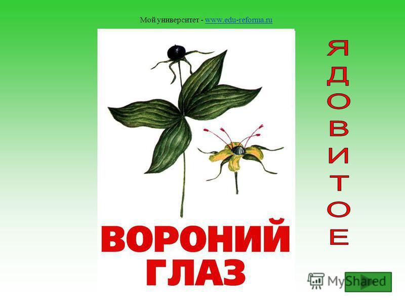 Мой университет - www.edu-reforma.ruwww.edu-reforma.ru