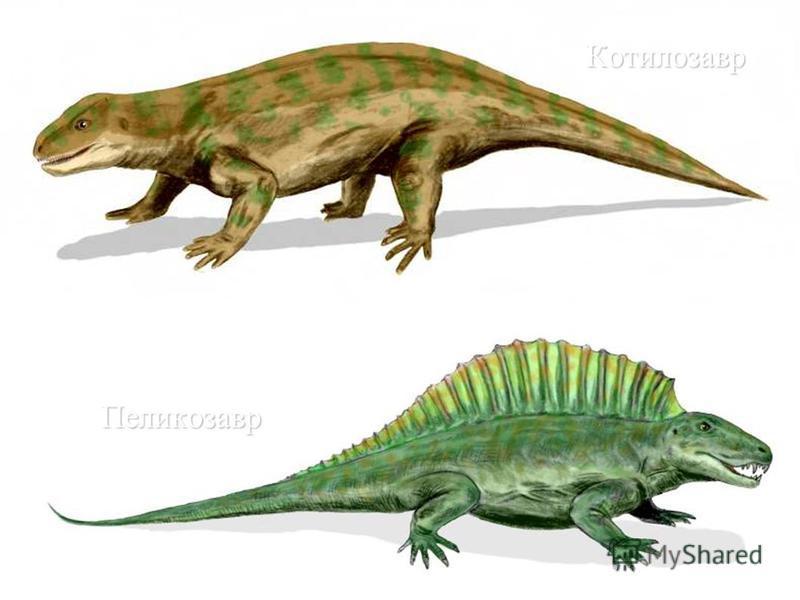 Котилозавр Пеликозавр