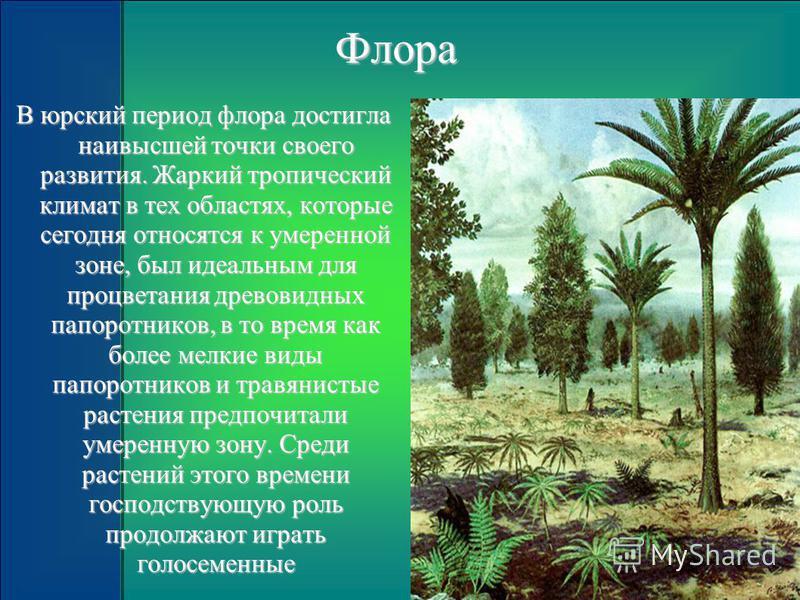 Флора В юрский период флора достигла наивысшей точки своего развития. Жаркий тропический климат в тех областях, которые сегодня относятся к умеренной зоне, был идеальным для процветания древовидных папоротников, в то время как более мелкие виды папор