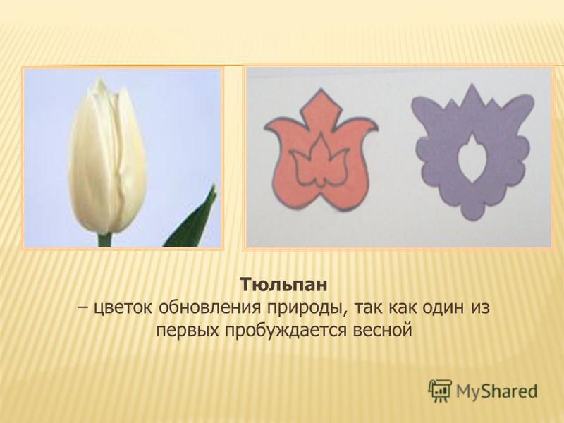 Тюльпан – цветок обновления природы, так как один из первых пробуждается весной