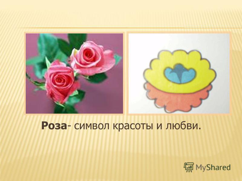 Роза- символ красоты и любви.