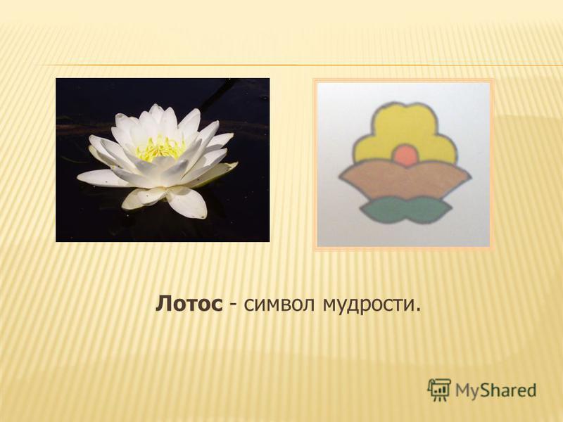 Лотос - символ мудрости.