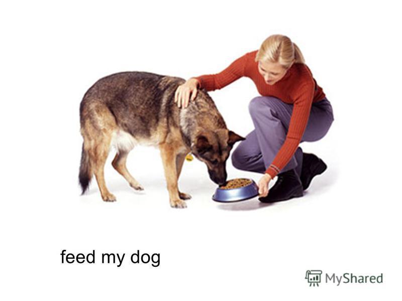 feed my dog