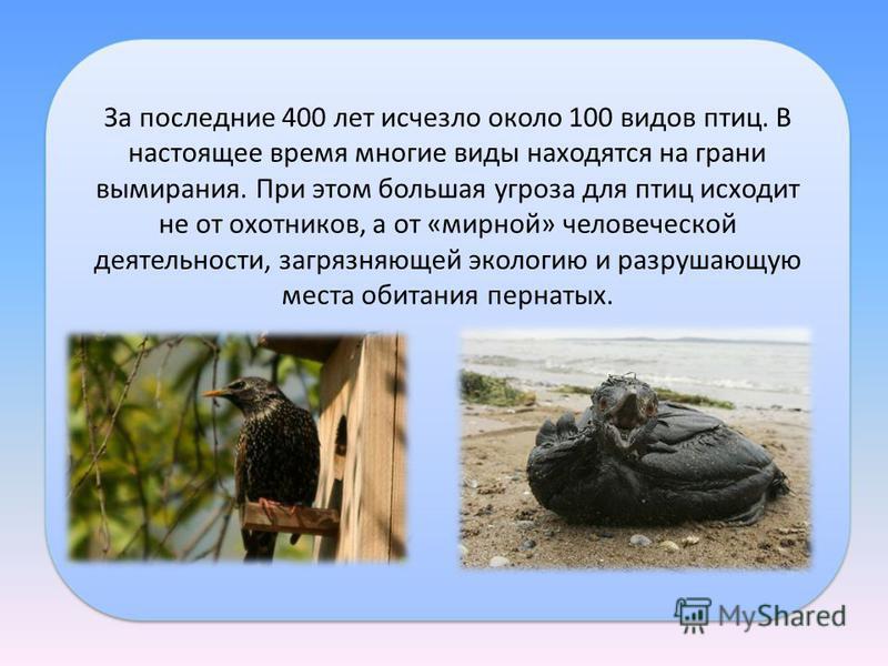 За последние 400 лет исчезло около 100 видов птиц. В настоящее время многие виды находятся на грани вымирания. При этом большая угроза для птиц исходит не от охотников, а от «мирной» человеческой деятельности, загрязняющей экологию и разрушающую мест