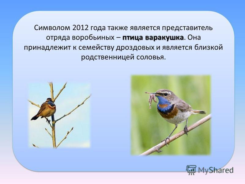 птица варакушка Символом 2012 года также является представитель отряда воробьиных – птица варакушка. Она принадлежит к семейству дроздовых и является близкой родственницей соловья.