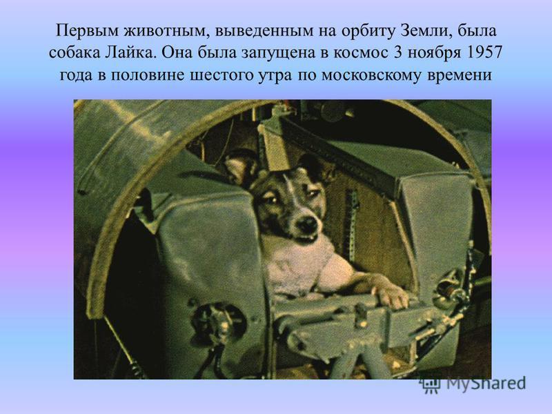 Первым животным, выведенным на орбиту Земли, была собака Лайка. Она была запущена в космос 3 ноября 1957 года в половине шестого утра по московскому времени
