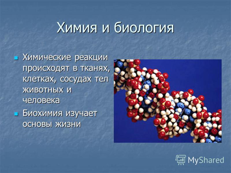 Химия и биология Химические реакции происходят в тканях, клетках, сосудах тел животных и человека Химические реакции происходят в тканях, клетках, сосудах тел животных и человека Биохимия изучает основы жизни Биохимия изучает основы жизни