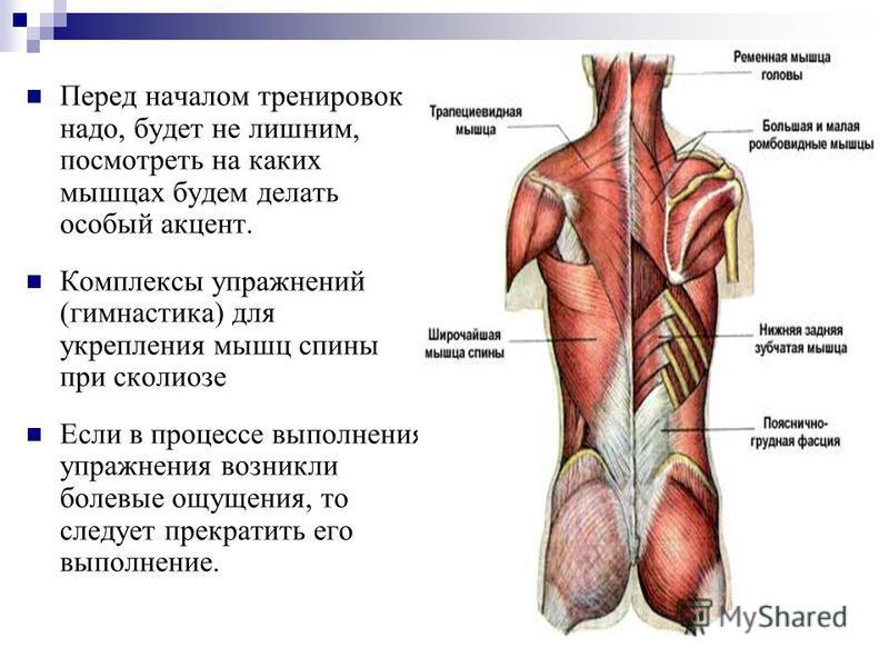 Перед началом тренировок надо, будет не лишним, посмотреть на каких мышцах будем делать особый акцент. Комплексы упражнений (гимнастика) для укрепления мышц спины при сколиозе Если в процессе выполнения упражнения возникли болевые ощущения, то следуе