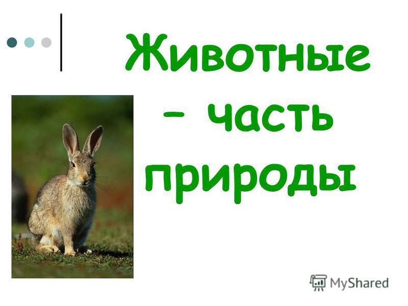 Животные – часть природы