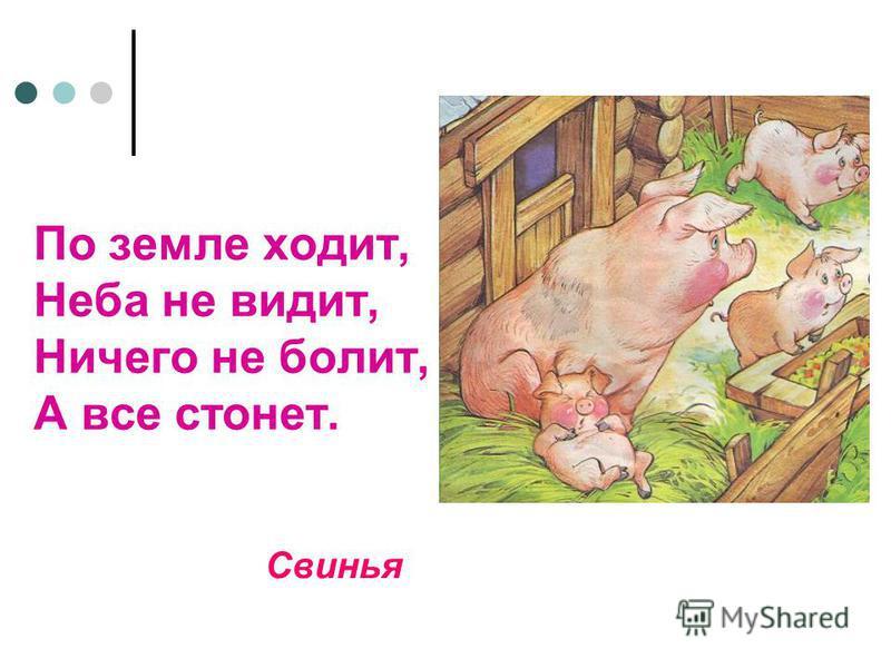 По земле ходит, Неба не видит, Ничего не болит, А все стонет. Свинья