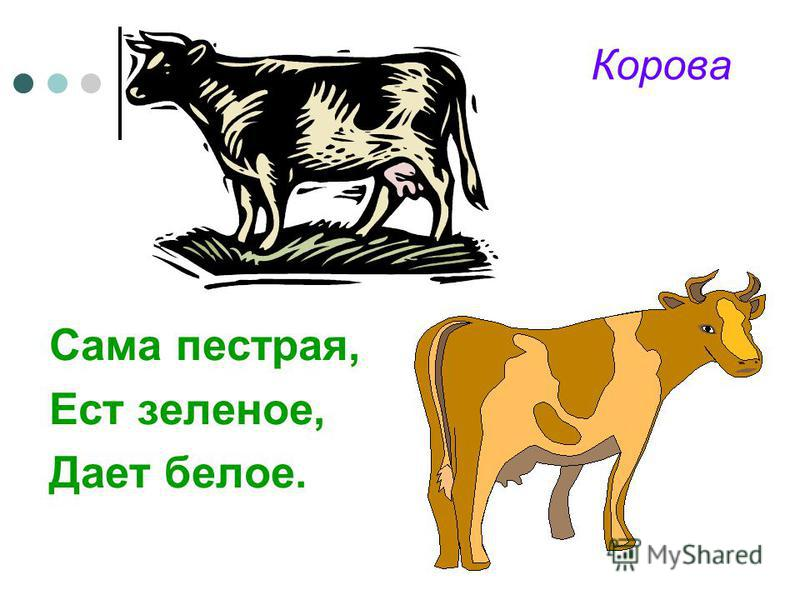 Корова Сама пестрая, Ест зеленое, Дает белое.