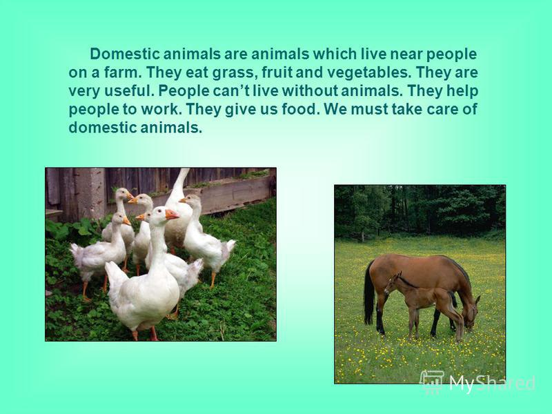 Domestic animals are animals which live near people on a farm. They eat grass, fruit and vegetables. They are very useful. People cant live without animals. They help people to work. They give us food. We must take care of domestic animals.