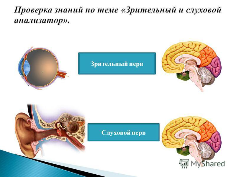 Зрительный нерв Слуховой нерв