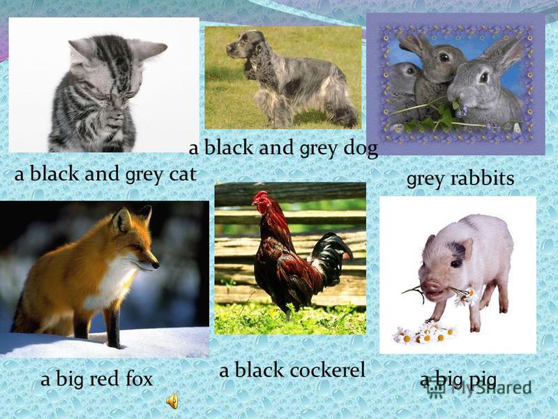 a black and g rey cat g rey rabbits a black and g rey dog a bi g red fox a black cockerel a bi g pi g