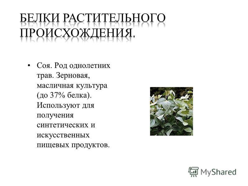 Соя. Род однолетних трав. Зерновая, масличная культура (до 37% белка). Используют для получения синтетических и искусственных пищевых продуктов.