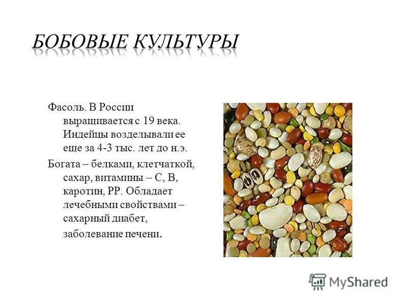 Фасоль. В России выращивается с 19 века. Индейцы возделывали ее еще за 4-3 тыс. лет до н.э. Богата – белками, клетчаткой, сахар, витамины – С, В, каротин, РР. Обладает лечебными свойствами – сахарный диабет, заболевание печени.