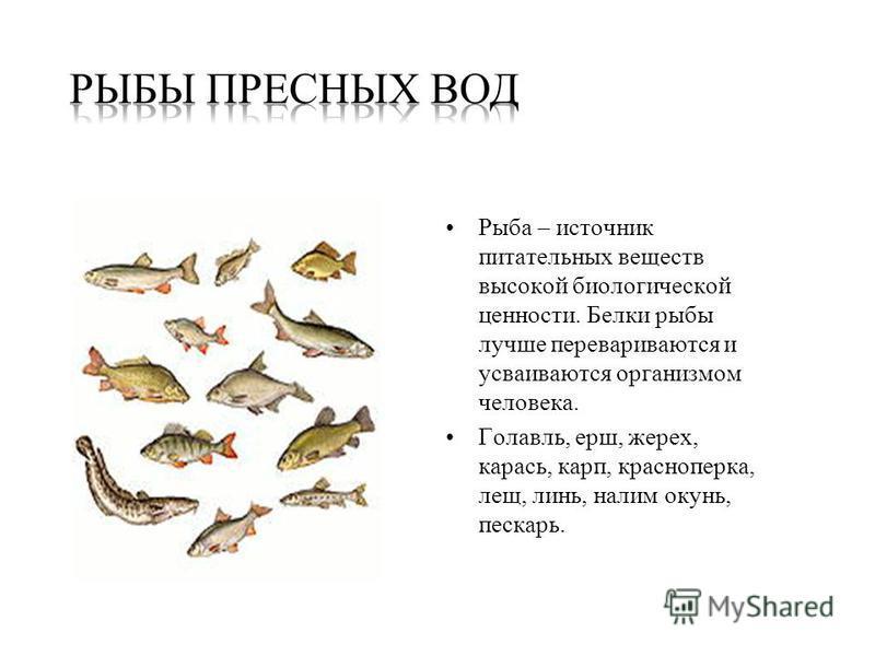 Рыба – источник питательных веществ высокой биологической ценности. Белки рыбы лучше перевариваются и усваиваются организмом человека. Голавль, ерш, жерех, карась, карп, красноперка, лещ, линь, налим окунь, пескарь.