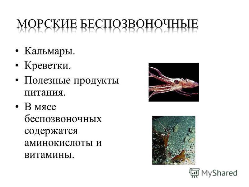 Кальмары. Креветки. Полезные продукты питания. В мясе беспозвоночных содержатся аминокислоты и витамины.