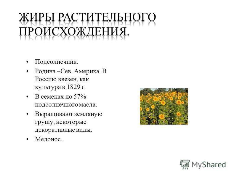 Подсолнечник. Родина –Сев. Америка. В Россию ввезен, как культура в 1829 г. В семенах до 57% подсолнечного масла. Выращивают земляную грушу, некоторые декоративные виды. Медонос.