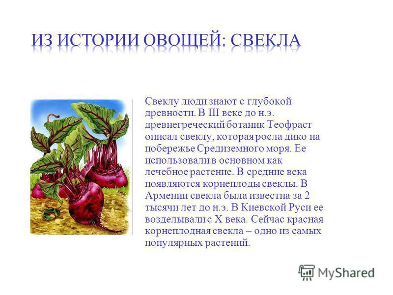Свеклу люди знают с глубокой древности. В III веке до н.э. древнегреческий ботаник Теофраст описал свеклу, которая росла дико на побережье Средиземного моря. Ее использовали в основном как лечебное растение. В средние века появляются корнеплоды свекл