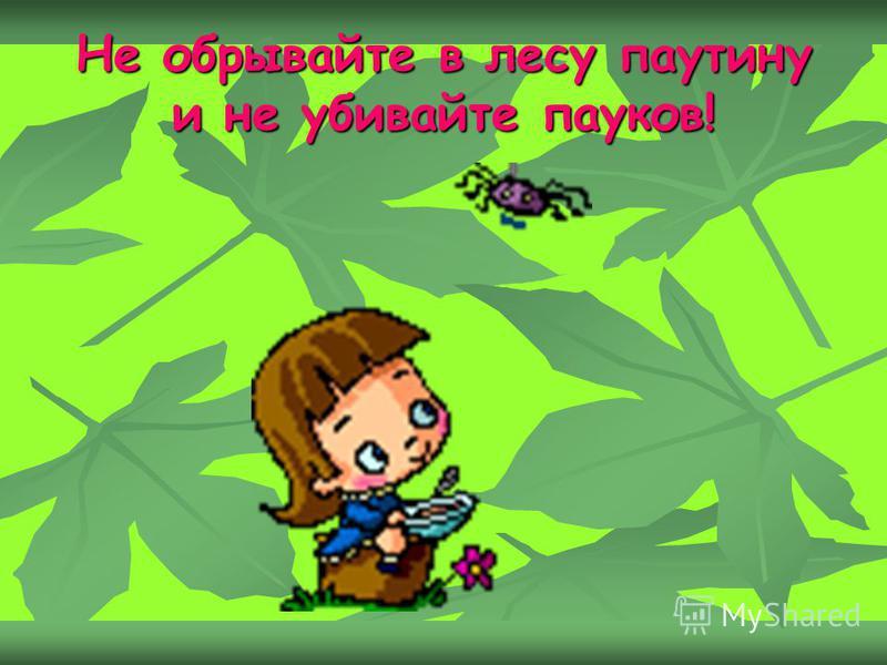 Не обpывайте в лесу паутину и не убивайте пауков!